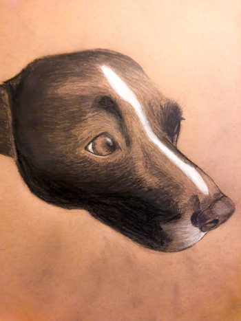 A charcoal sketch of my dog, Ripley