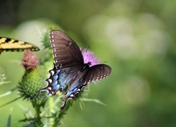 A butterfly on a green background